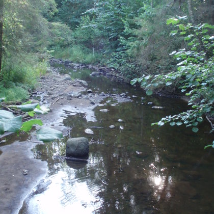 Rauzas upes pēreņu liegumā... Tu zini kas ir upes pērlene (Margaritifera margaritifera) ?!