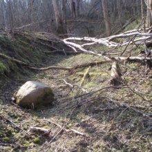 Kokus un akmeņus rijējs atstāj...